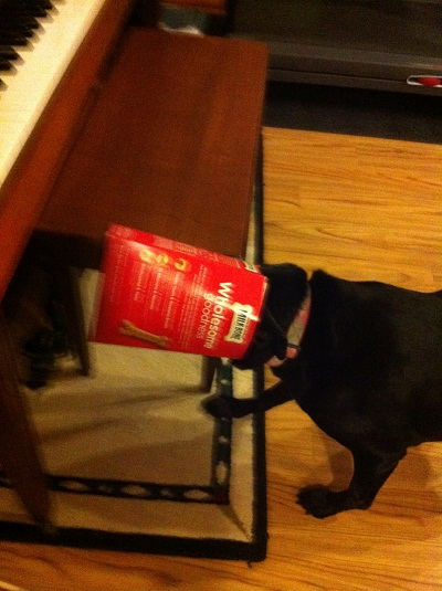 Lola was trying to get every last morsel out of the dog bone box...