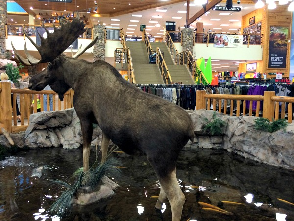 Just hanging out with a huge taxidermy moose in Cabelas...