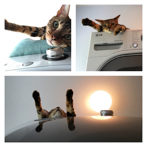Cat on the dryer
