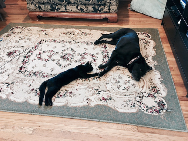 Black cat and black dog laying together