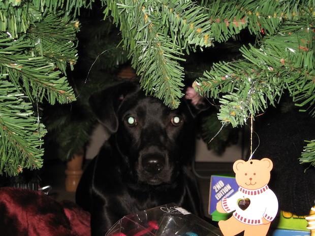 lola-first-christmas