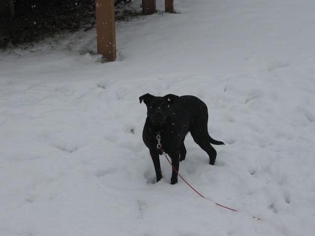 lola-in-snow