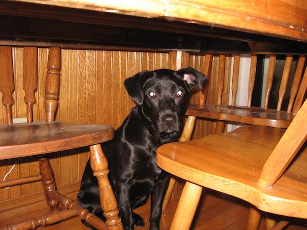 Lola as a puppy.
