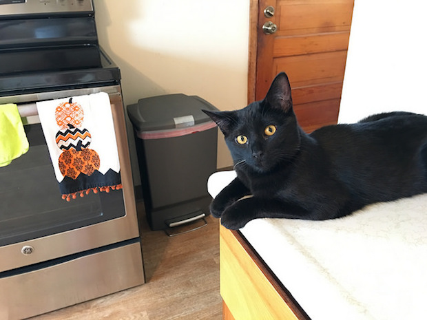Black cat sitting on counter