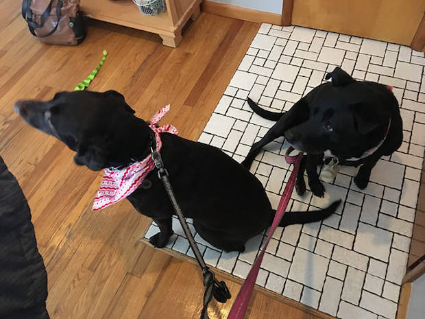 Haley and Lola before a walk!