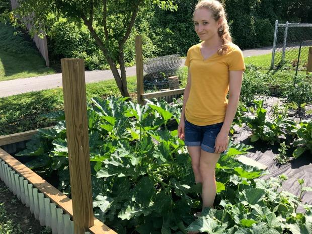 Garden with zucchini