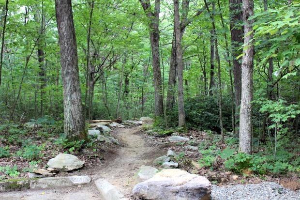 Hiking trail at Jake's Rock in Kinzua PA