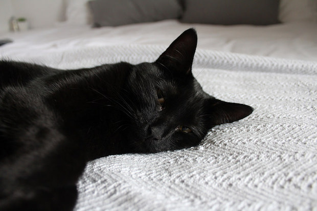 Black cat sleeping on bed