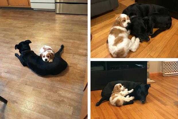 Dog and puppy cuddling