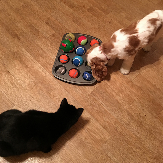 Dog and cat doing a puzzle together with tennis balls