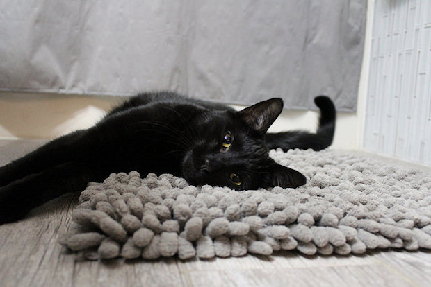 Black cat laying on gray rug