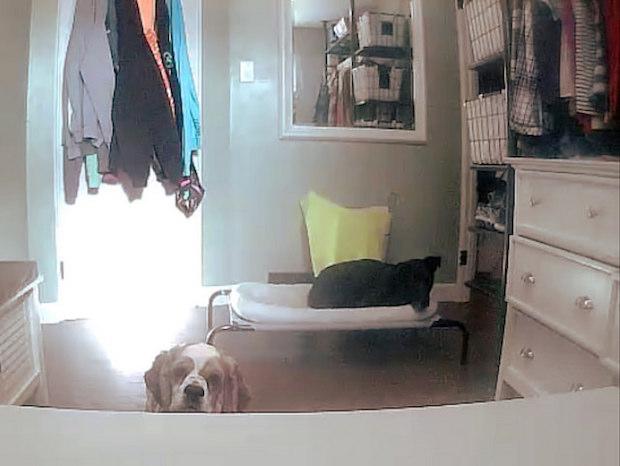 Dogs on Petzi treat cam