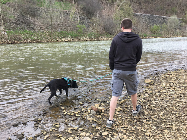 Guy and black lab with harness and leash walking by water creek in Pittsburgh