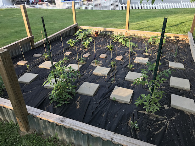 Vegetable garden with fence and weed block