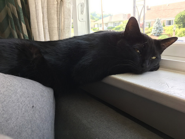 Black cat laying in windowsill