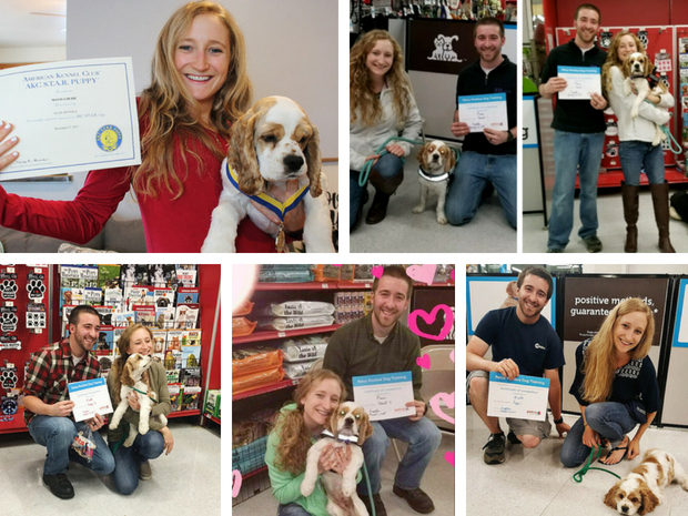 Puppy training classes at Petco with cocker spaniel and AKC Star Puppy Test