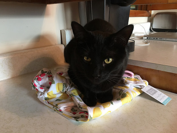 Black cat laying on baby clothes