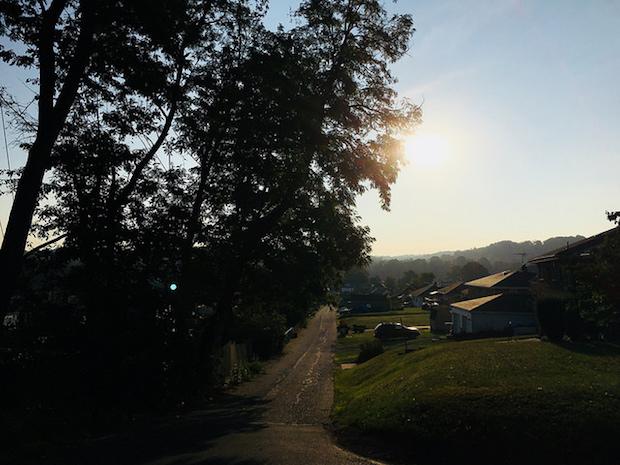 Summer sunrise between trees
