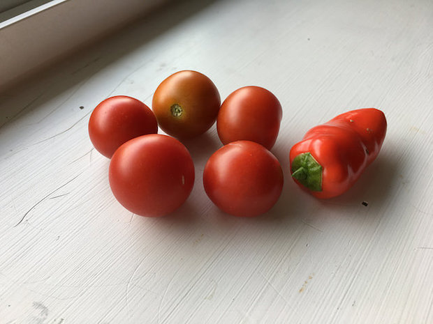 Cherry tomatoes and mini red pepper from vegetable garden on white windowsill