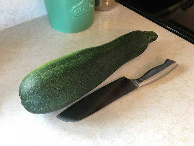 Large zucchini from vegetable garden