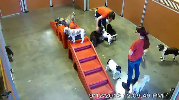 Small dogs at Camp Bow Wow Pittsburgh Southwest Web Cam