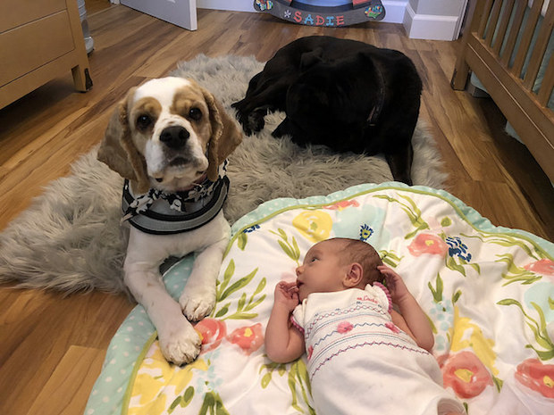 Dogs and baby