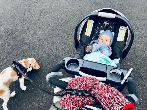 Baby in stroller with cocker spaniel dog walking beside