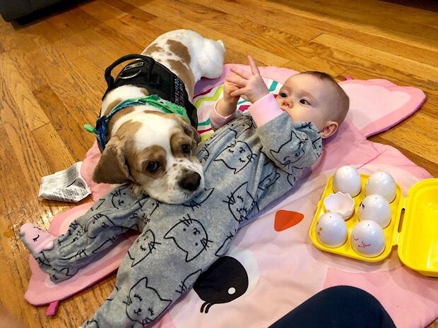 Cocker spaniel cuddling with baby girl