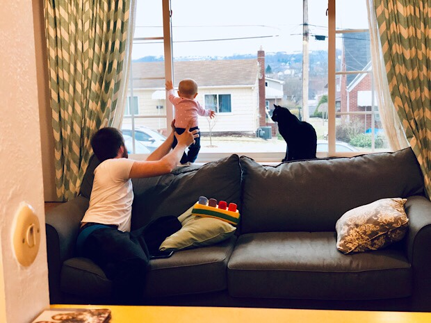 Dad holding baby up to window with cat