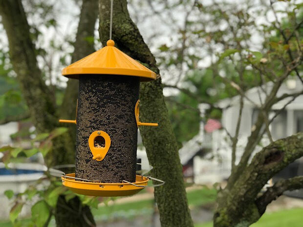 Yellow bird feeder for finches and songbirds