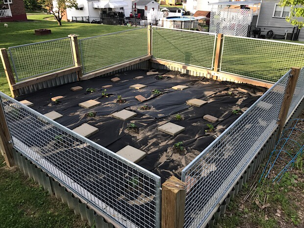 Vegetable garden with steel and wood fence