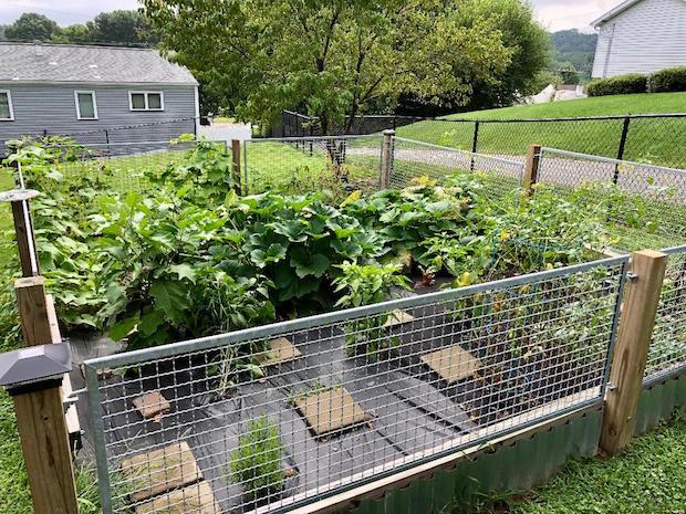 Vegetable garden inside fence