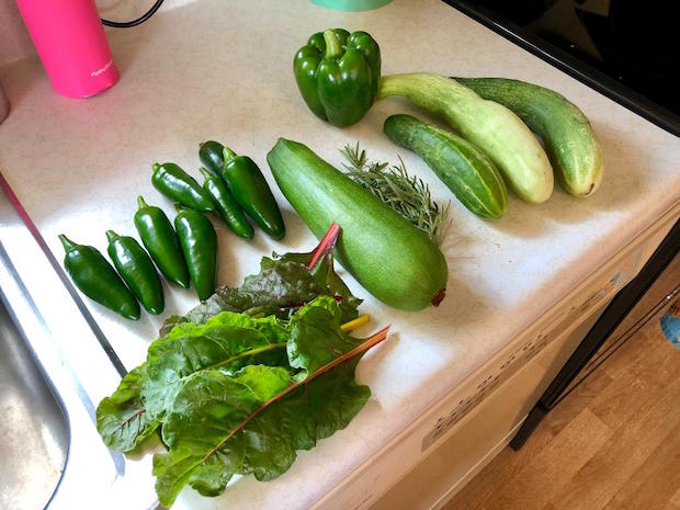 Garden harvest of jalapenos, cucumbers, zucchini, swiss chard, rosemary, and green bell pepper