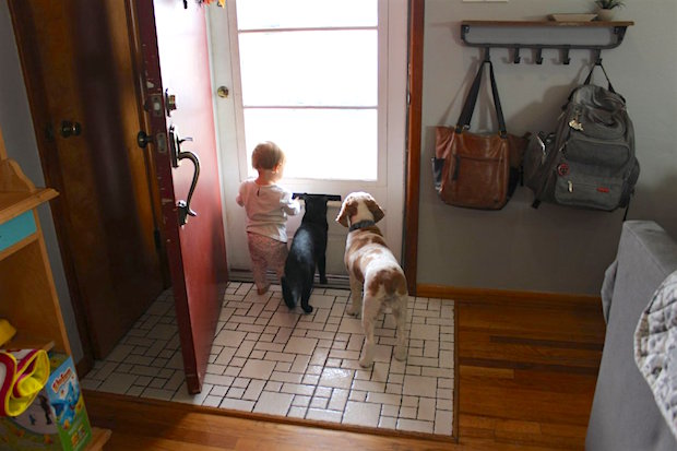 Baby dog and cat waiting at door together