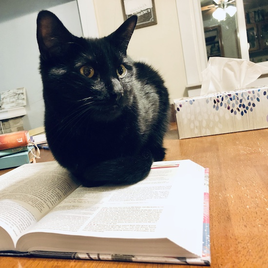 Black cat sitting on Bible