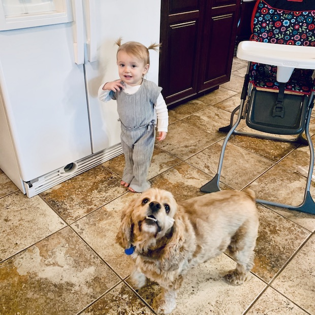 Toddler in jumpsuit with cocker spaniel