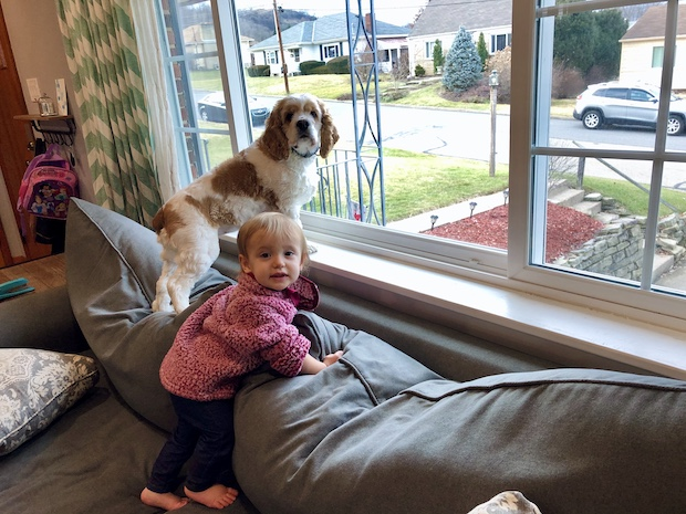 Cocker spaniel and baby on couch together