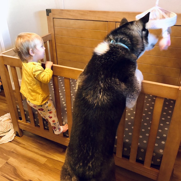 Toddle and husky on crib rails