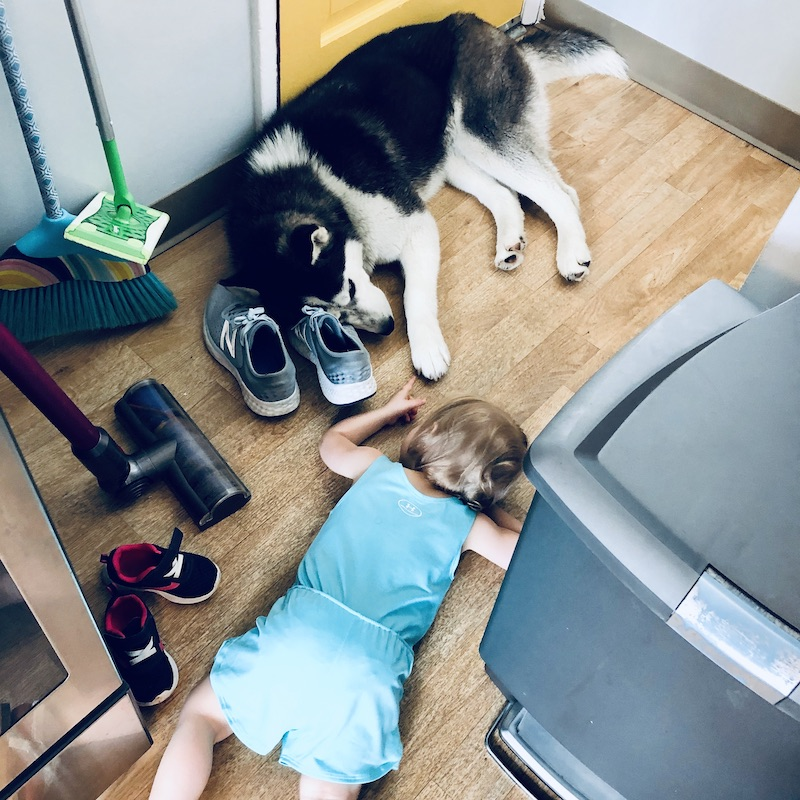 Husky and toddler laying together