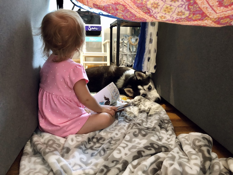 Husky and toddler in fort