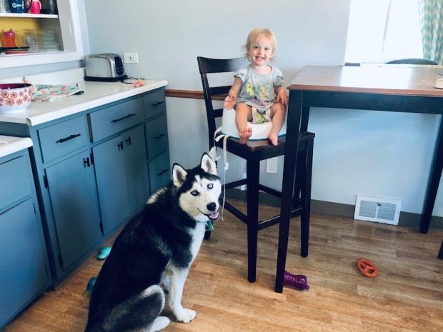 Toddler and husky