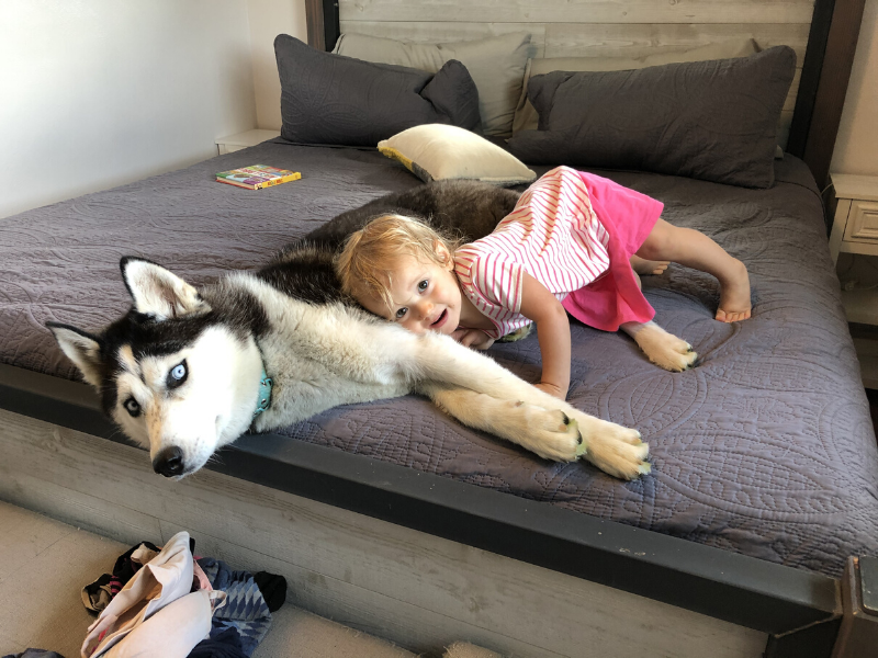 Husky and toddler laying on bed