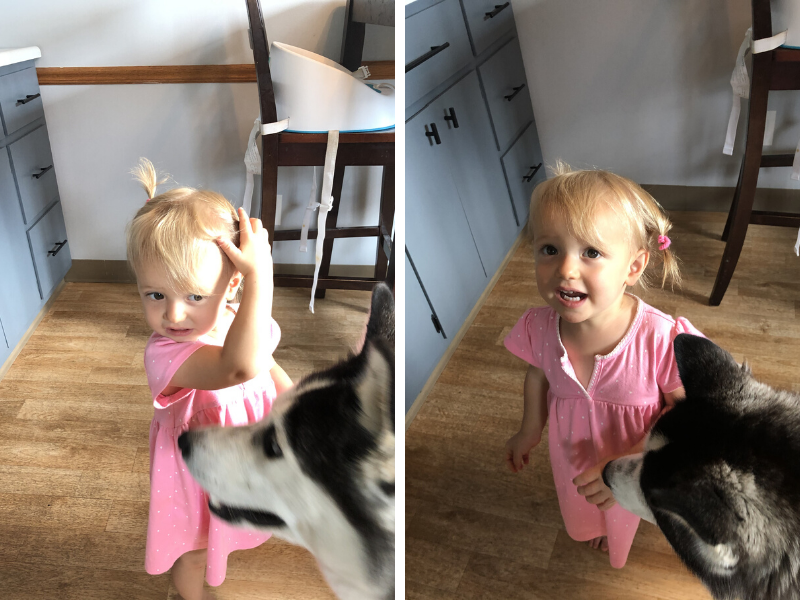 Toddler pulling hair out of pigtails