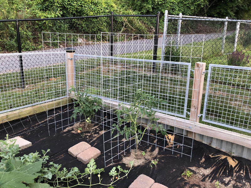 Mesh panels for tomato plants