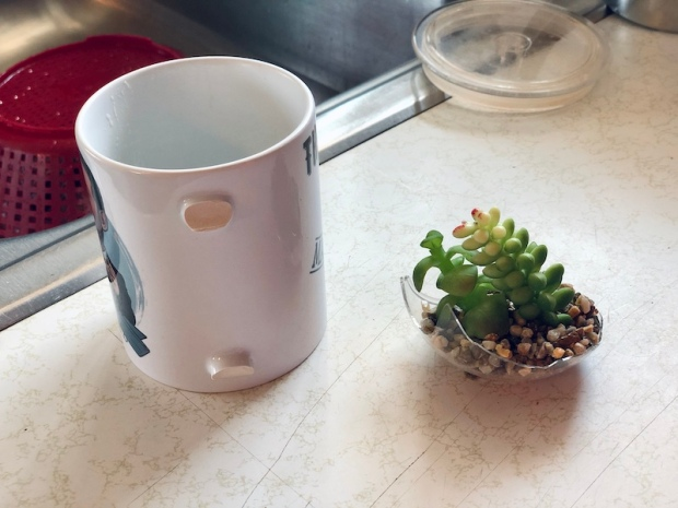 Broken coffee mug and glass succulent holder