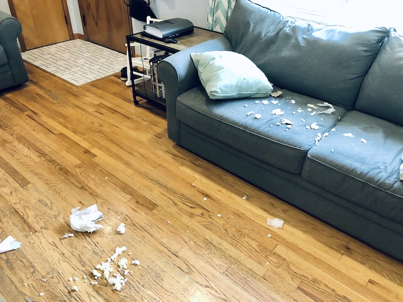Couch with chewed up diaper