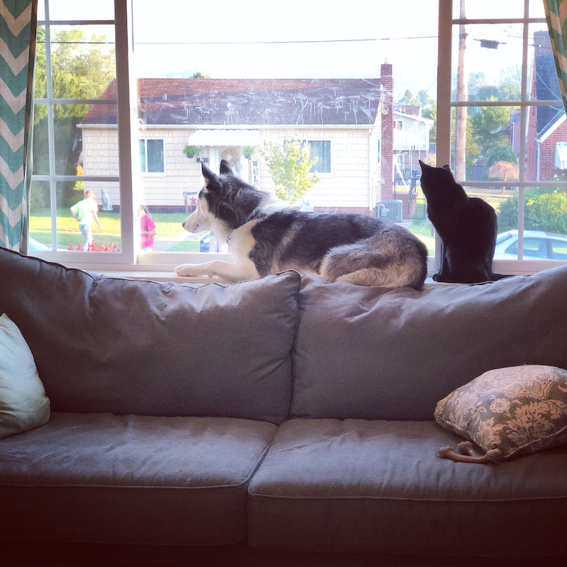 Siberian Husky and cat sitting together