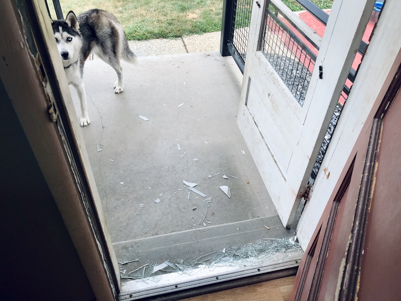 Husky broke glass door by jumping