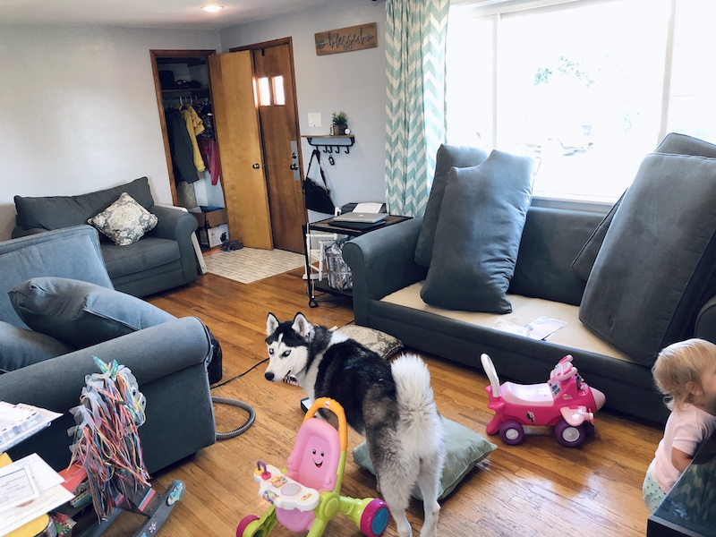 Siberian Husky in living room