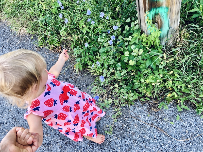 Barefoot toddler picking flowers